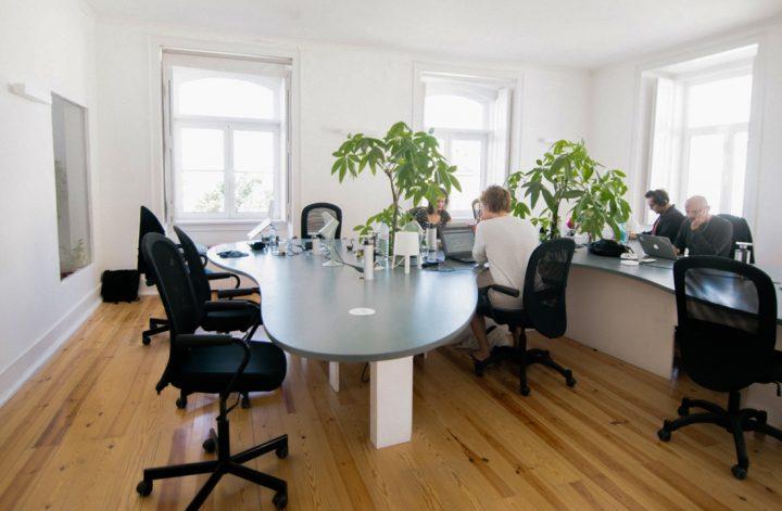 Come arredare l'ufficio con piante alte