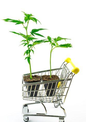"""Comprare Cannabis online """"che passione""""!"""